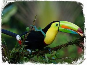 sonhando com tucanos