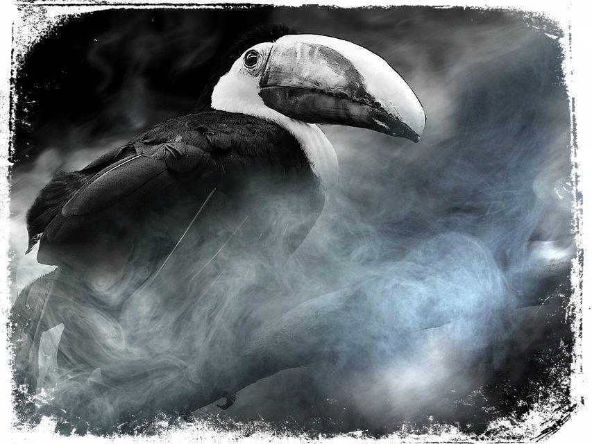 Sonhar com Tucano preto o que significa