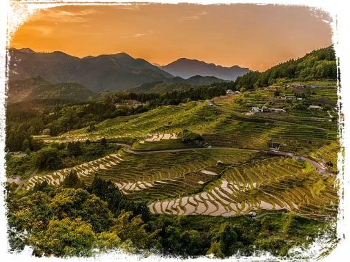 Sonhar com plantação de arroz