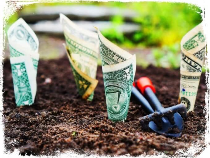 Sonhar com plantação de dinheiro