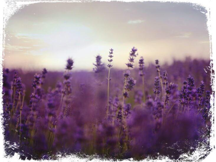 Sonhar com plantação de flores