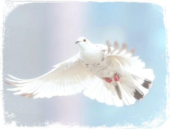 sonhar vendo espirito santo