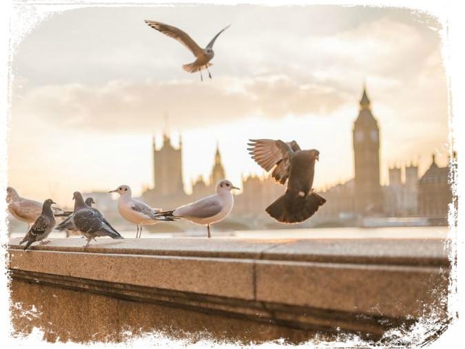 sonhar com muitos pombos pousados
