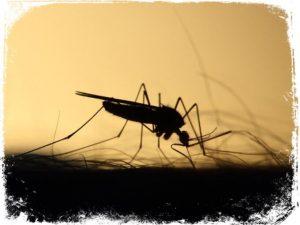 sonhar com mosquito