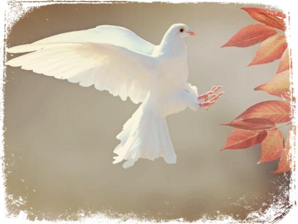 Sonhos com pombas brancas o que significam