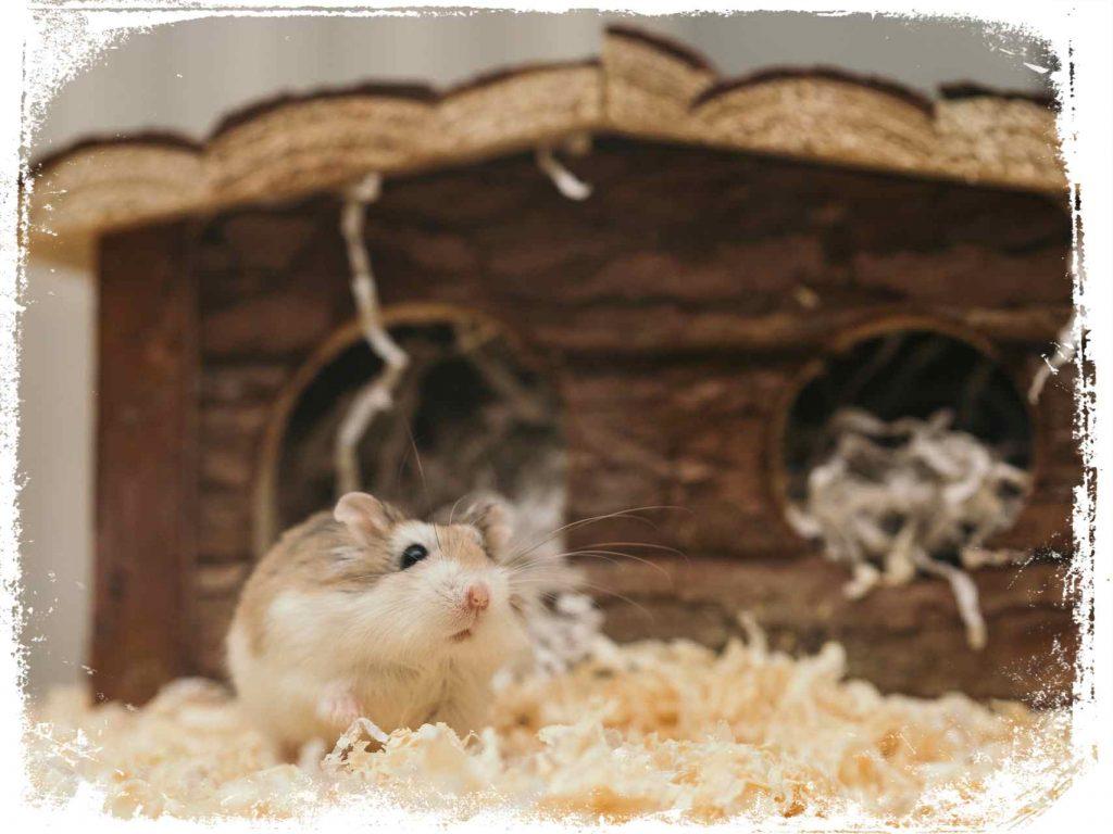 sonhar com hamster e bom ou ruim