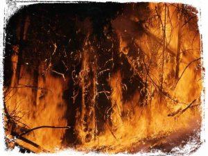 significado de mato pegando fogo