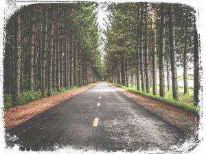 ver mato na estrada em sonho