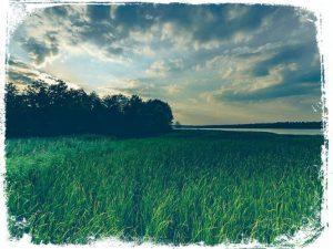 ver mato verde em sonho