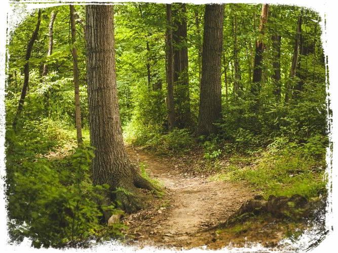 o que e sonhar com trilha