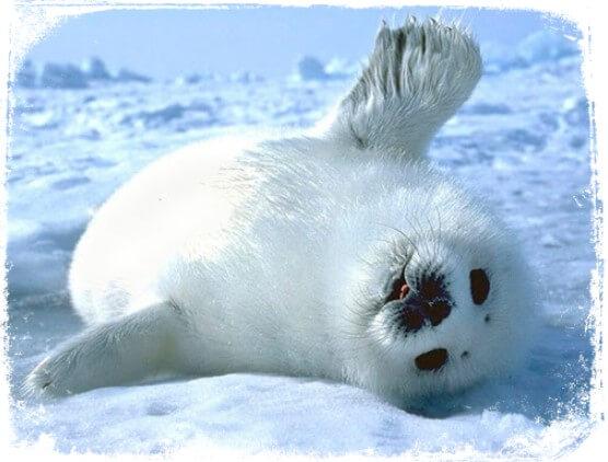 sonhar com foca filhote
