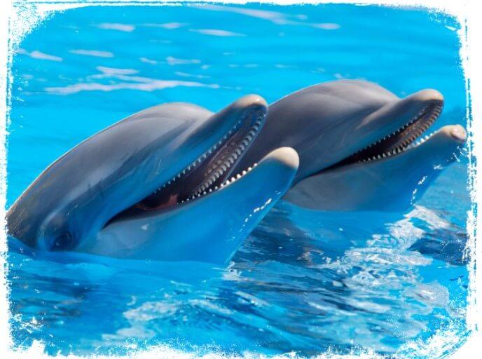sonhar com golfinhos o que pode significar