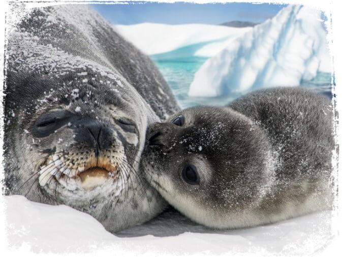 significado de sonhar com foca