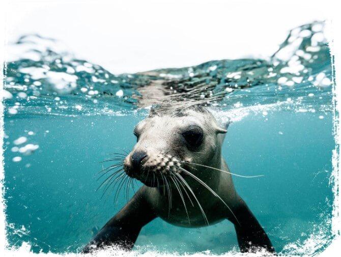 sonhar com foca na agua