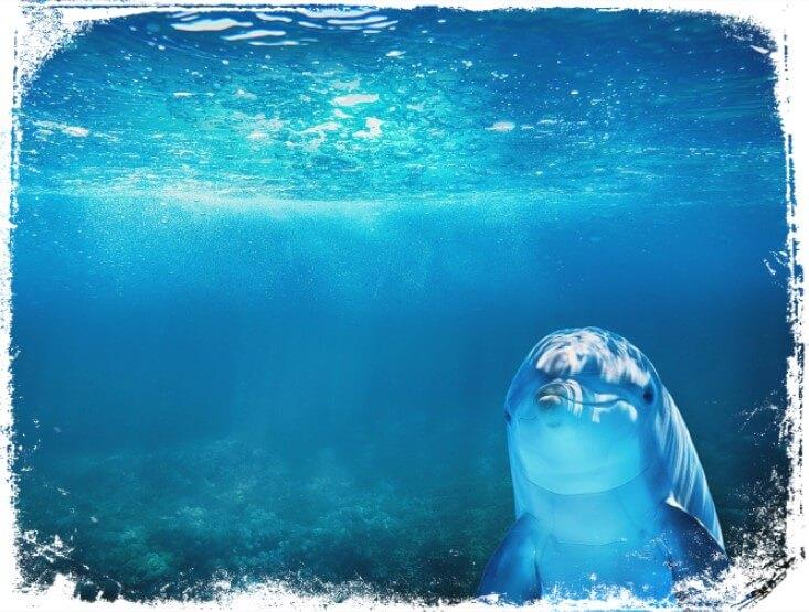 o que sonhar com golfinho