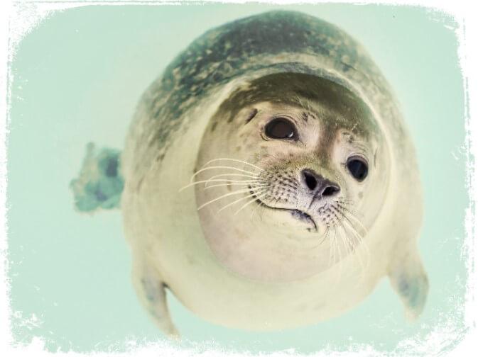 o que significa sonhar com foca