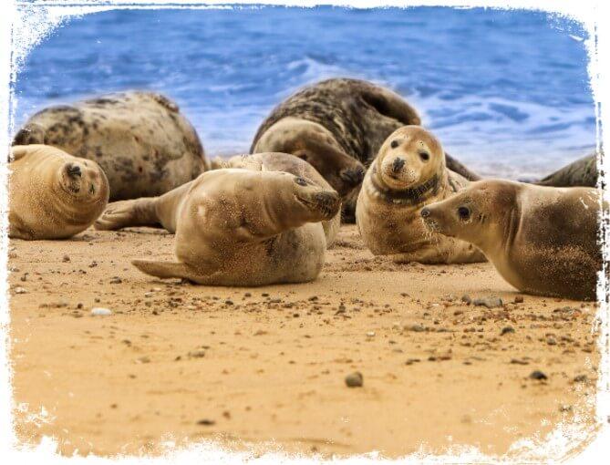 Como interpretar meu sonho com focas