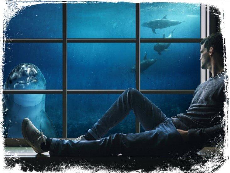 sonhar com golfinho falante