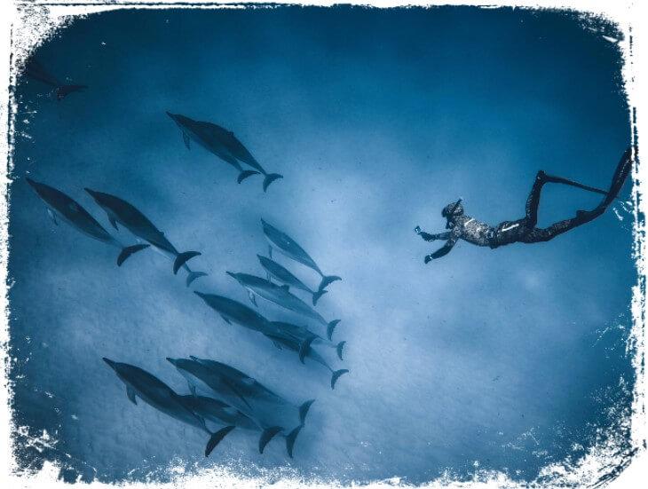 sonhar nadando com golfinhos