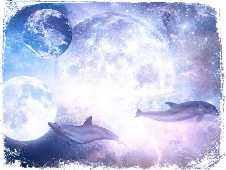 sonhos com golfinhos