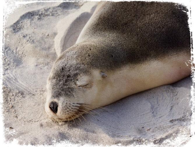 sonhar com focas