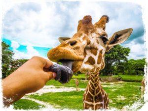 O que significa sonhar com zoologico