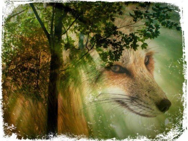 O que significa sonhar com animais?