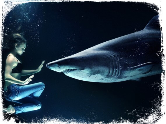 Sonhar com animais marinhos