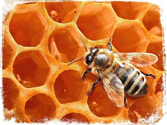 Significados de Sonhar com mel e abelha