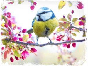 O que significa sonhar com passarinho?
