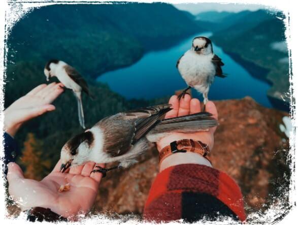 Sonhar alimentando um pássaro
