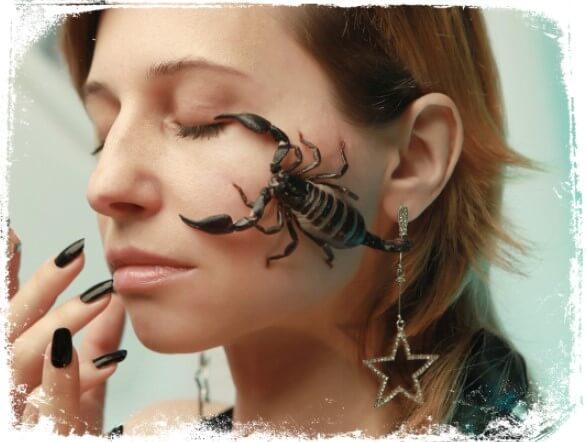 Sonhar com animais peçonhentos ou insetos