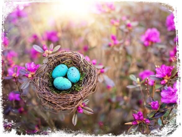 Sonhar com ninho de passarinho