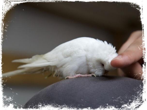 Sonhar com pássaro manso