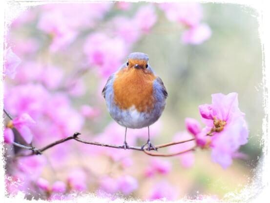 Sonhar com passarinho pousando