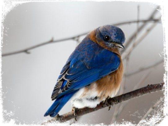 Sonhar com pássaro azul