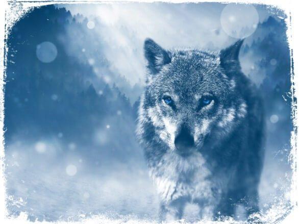Sonhar que um animal nos segue ou nos ameaça