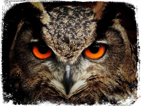 Simbologia e interpretação psicológica para sonhar com animais