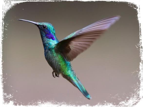 O Que Significa Sonhar com Passarinho, Pássaro ou Aves