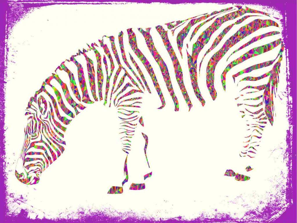 qual significado de zsonhar com zebra em cores