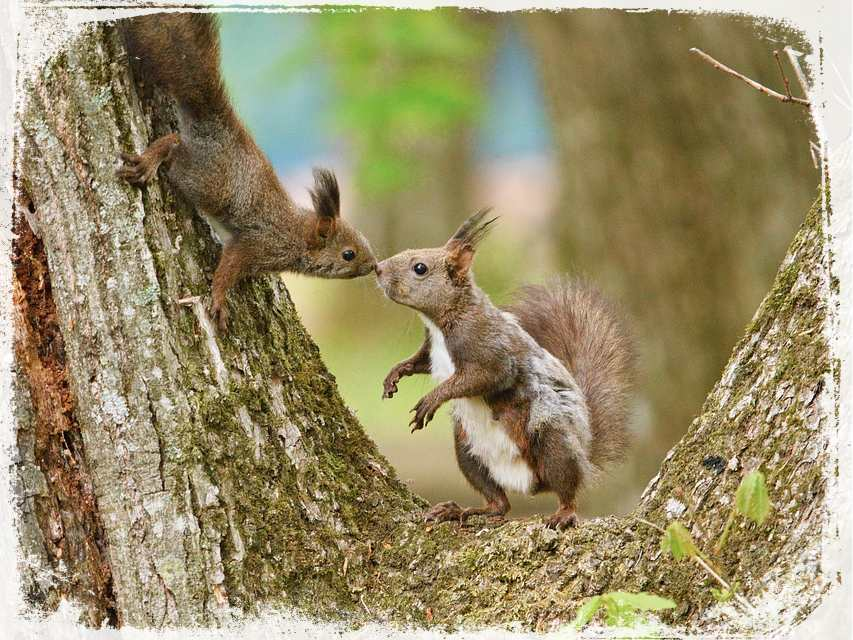 Sonhar com casal de esquilos