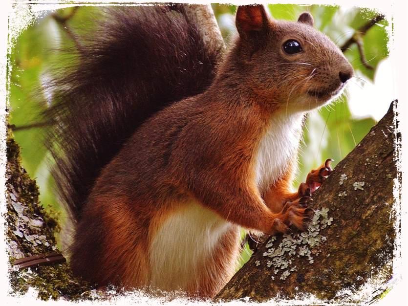 Sonhar com esquilo subindo em árvore