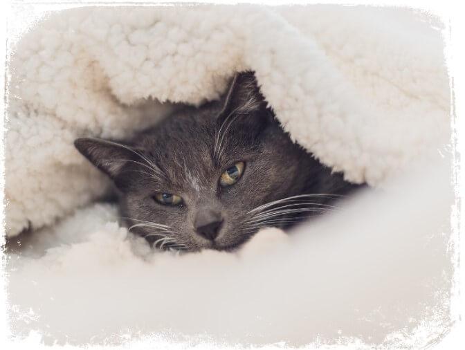 O que Significa Sonhar com Cobertor? (manta ou coberta)