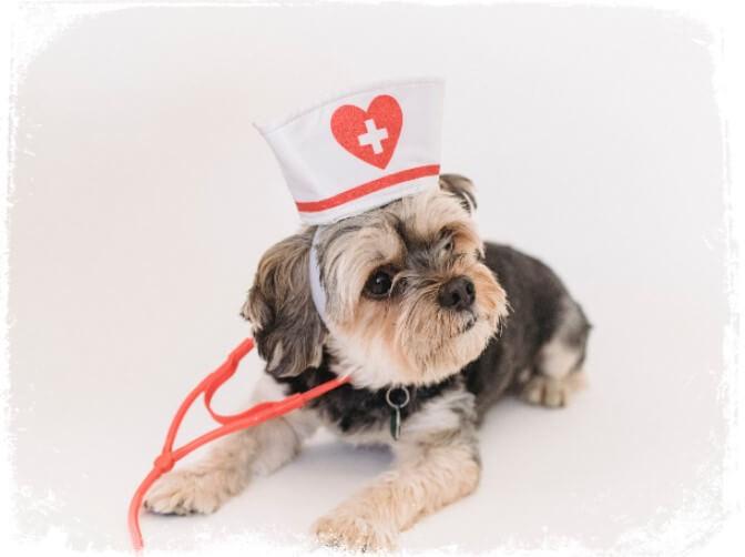 Sonhar com chapéude umaenfermeira