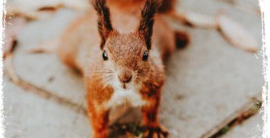 o que significa sonhar com esquilo