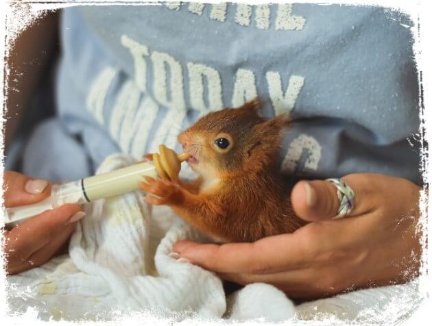 Sonhar que pega esquilo nas mãos