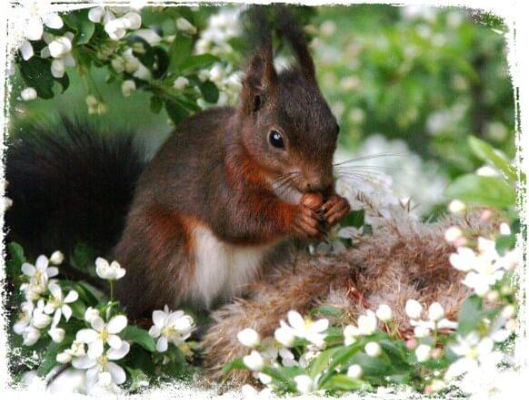Sonhar com esquilo no ninho