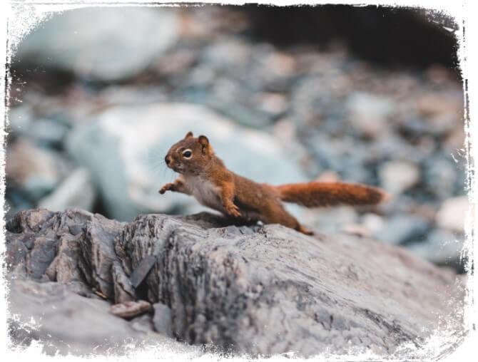 Sonhar com esquilo fugindo