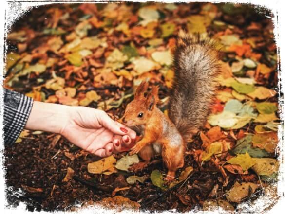 Sonhar que brinca com esquilo