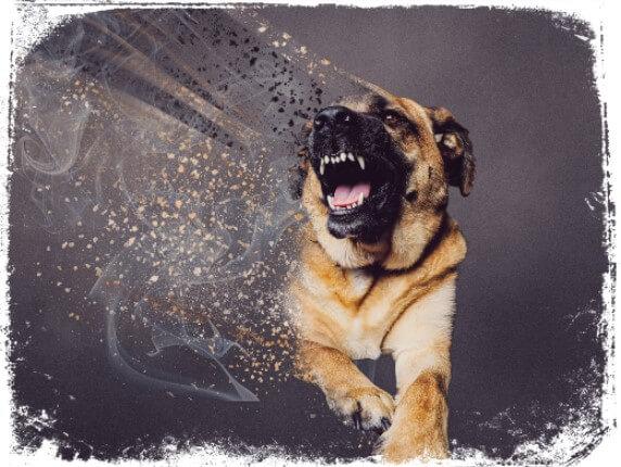 Sonhar com ameaça de cachorro bravo